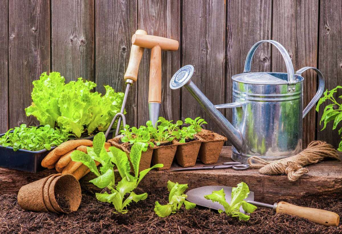 With planting season just around the corner consider adding locally produced seeds to your garden's soil.