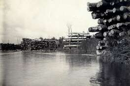 A view of logs piled along the banks of the Manistee River circa 1890. Scenes like this were common in the area during the time when Fred Lazotte and his father were involved in the logging industry.