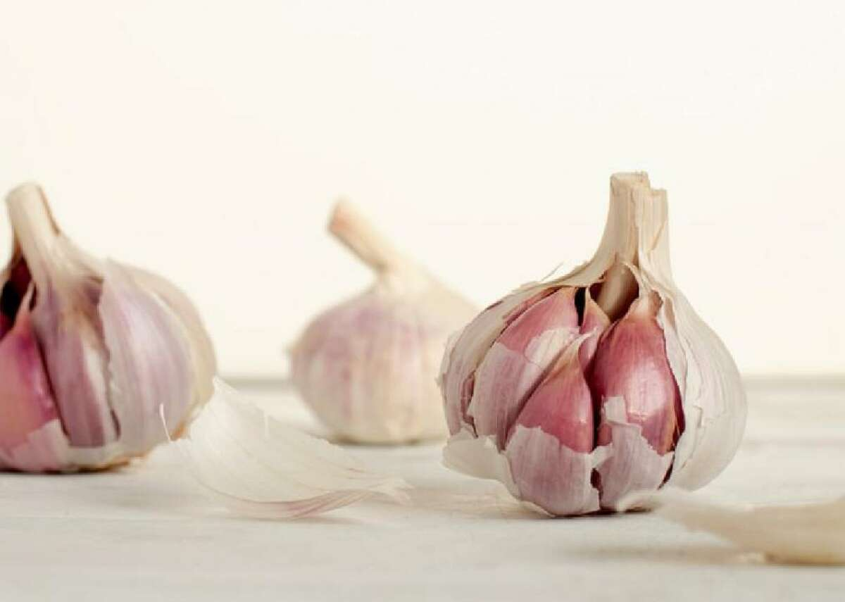 Garlic Garlic is an allium, a family of foods that can be fatal to dogs due to a compound called thiosulfate that damages red blood cells. It takes a lot of garlic to cause toxicity but some breeds, particularly Japanese ones (such as akitas and shiba inus), are particularly susceptible.