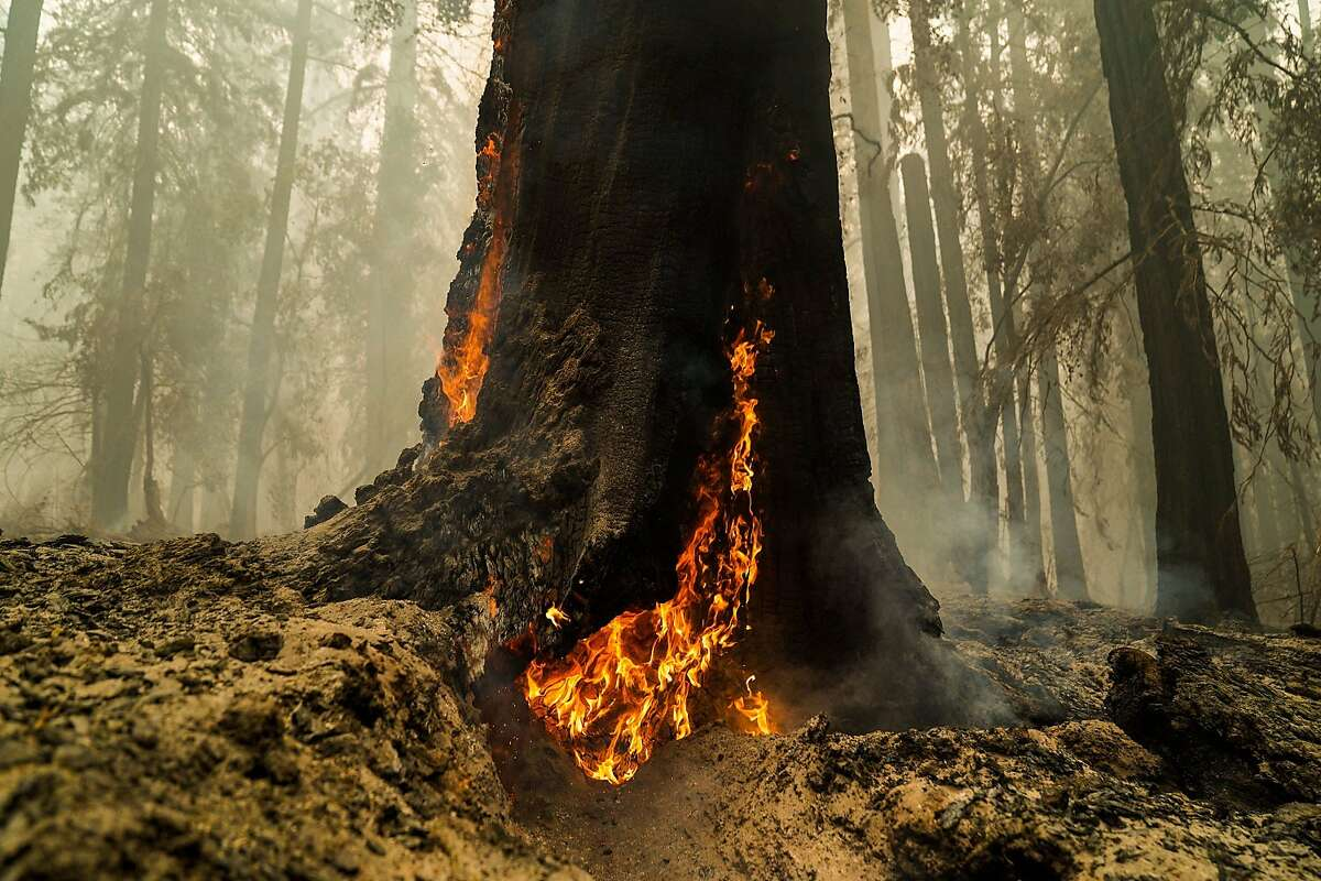 Smoke hangs low in the air at Big Basin Redwoods State Park as some redwoods continued to burn on Aug. 22, 2020, in Boulder Creek, Calif. (Kent Nishimura/Los Angeles Times/TNS)