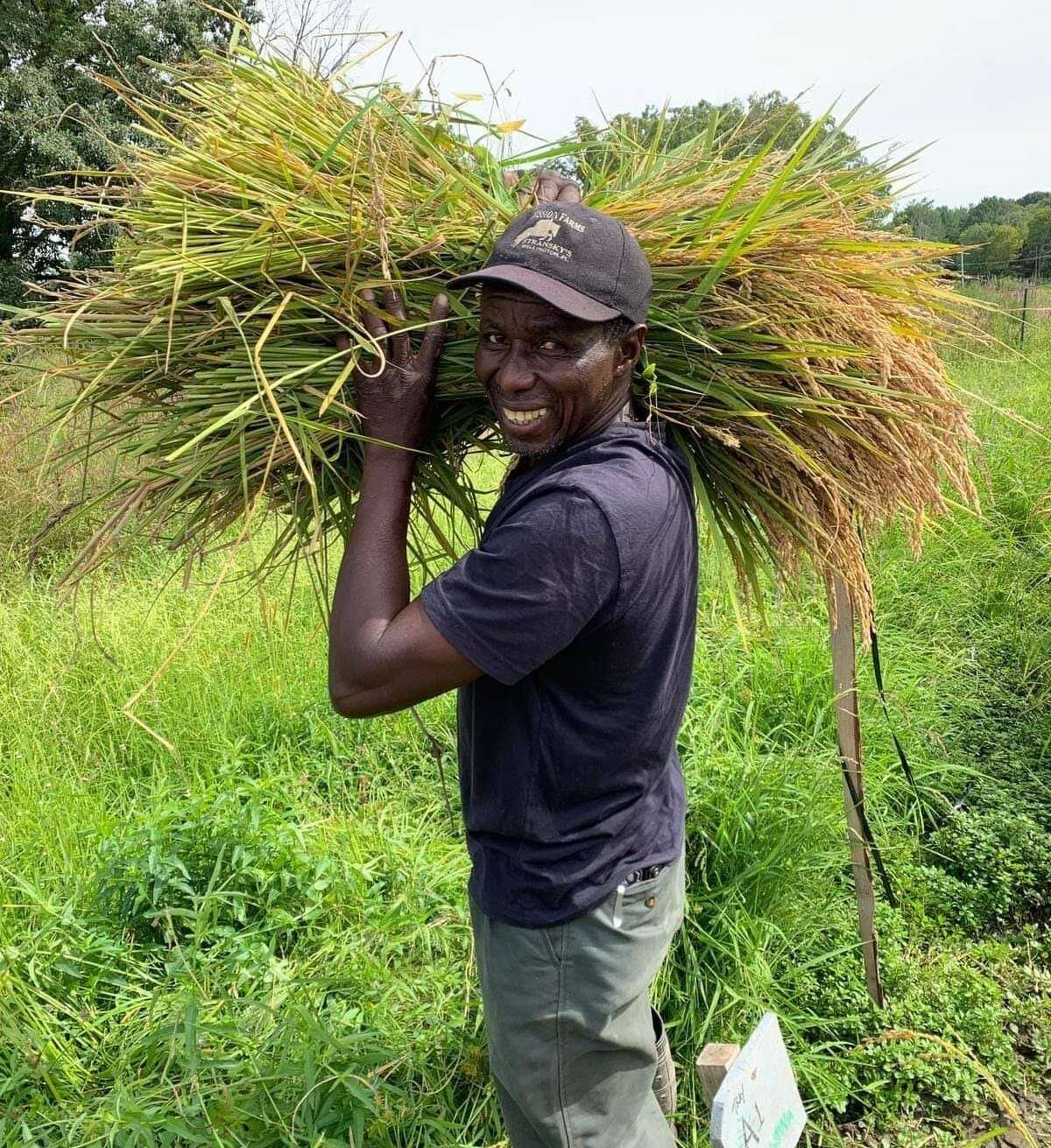 Ever-Growing Family Farm in Ulster Park is New York state's first commercial rice farm, and farmers Dawn Hoyte and Nfamara Badjie use the traditional rice growing methods of Gambia's Jola tribe, of which Badjie, pictured, is a member. As rainfall continues to increase in the region - a nearby weather center reported an average of 9.1 more inches of rain in 2010 than in 1957 - it might not be such a novel crop.