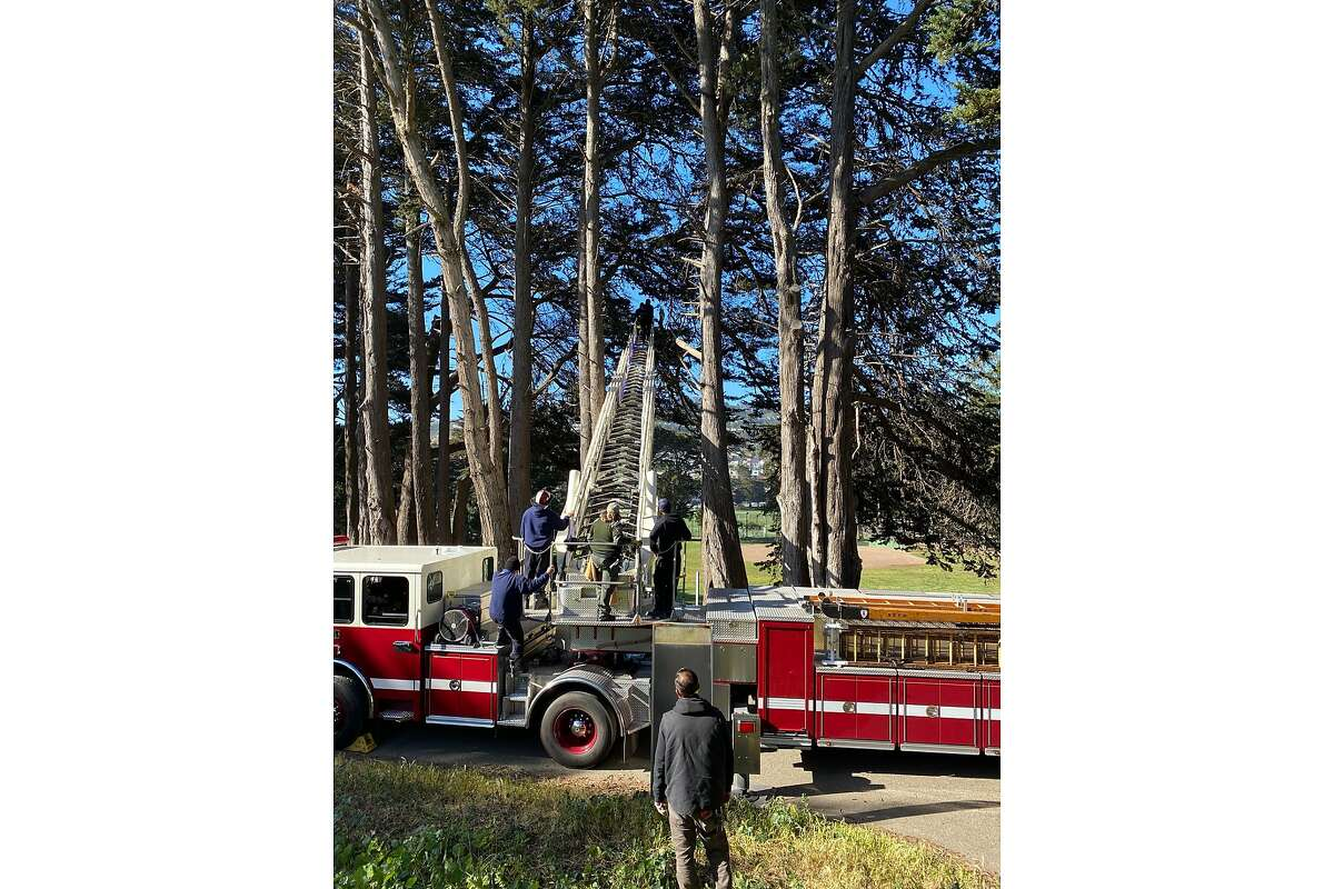 Firefighters rescue a trapped owl near Geneva Avenue and Moscow Street in San Francisco on Tuesday, May 5, 2021.