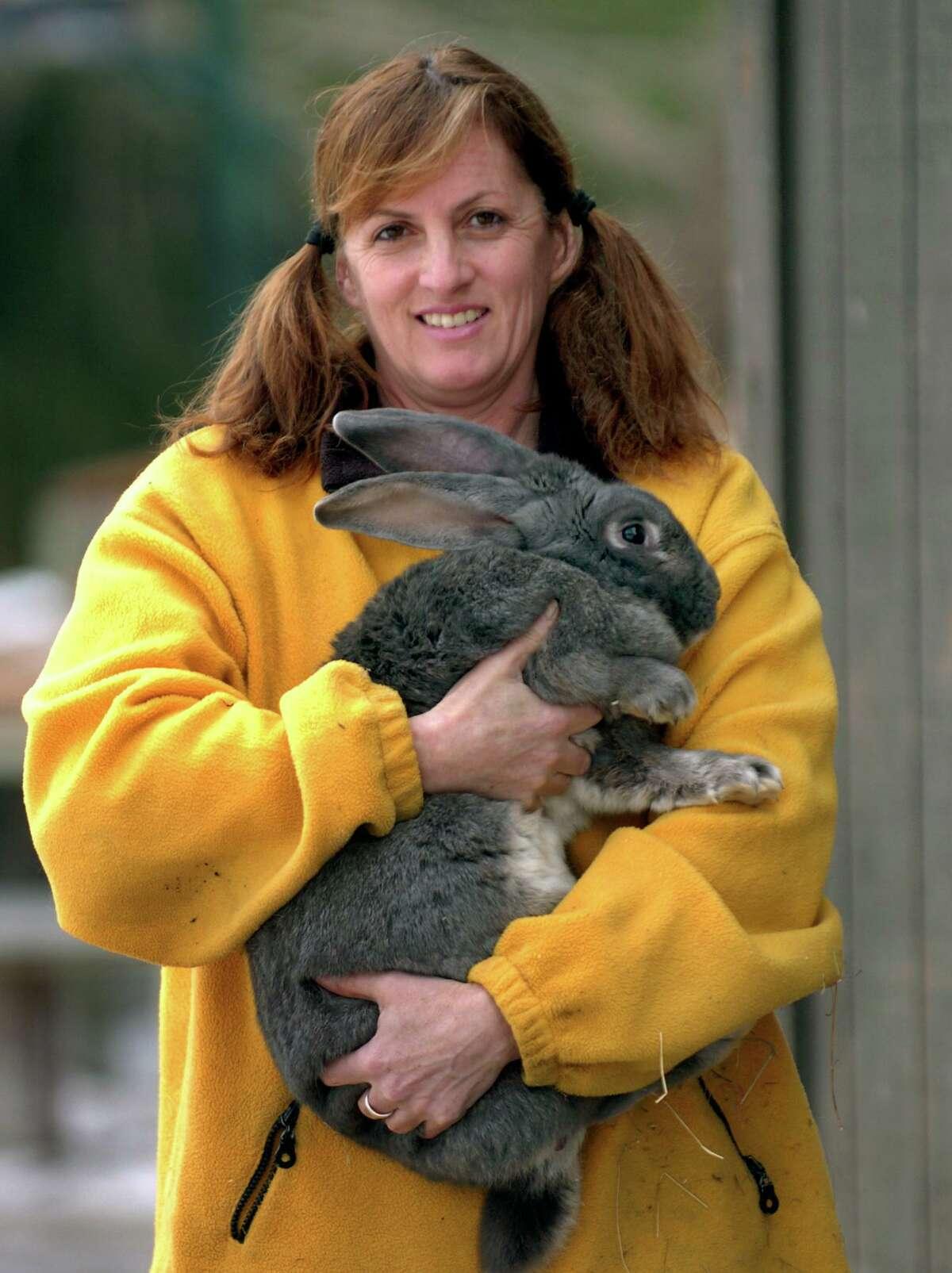 At Zenko Farm in Monroe, Joan Zenko shows off one massive Flemming rabbit which can get as heavy as 20 pounds.