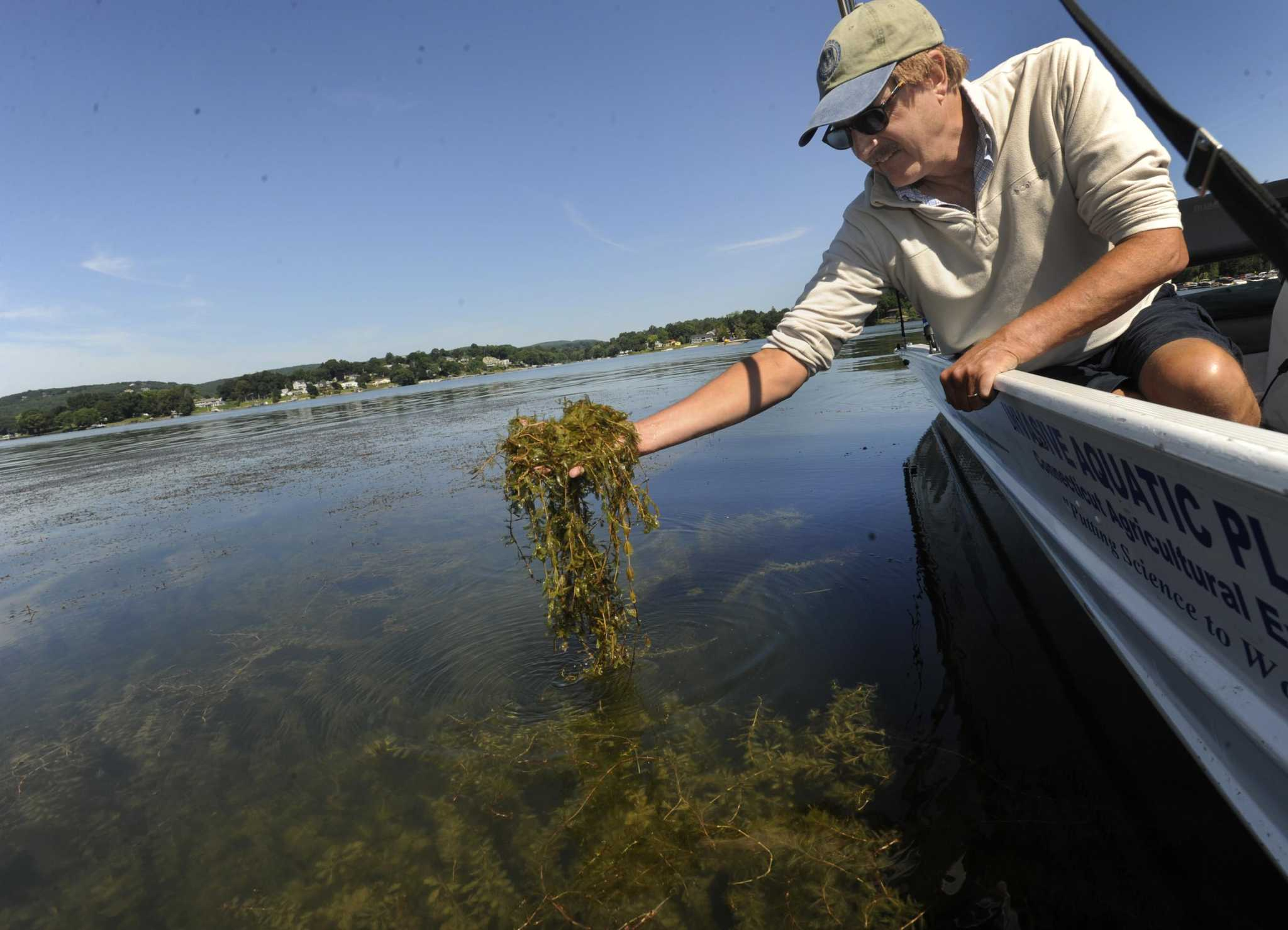 State grant money will go toward combatting invasive species in Candlewood Lake and other CT waters - Danbury News Times