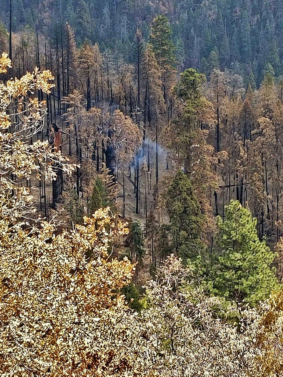 A giant sequoia tree in Sequoia National Park caught fire in August 2020 during the Castle Fire and is still smoldering nine months later.