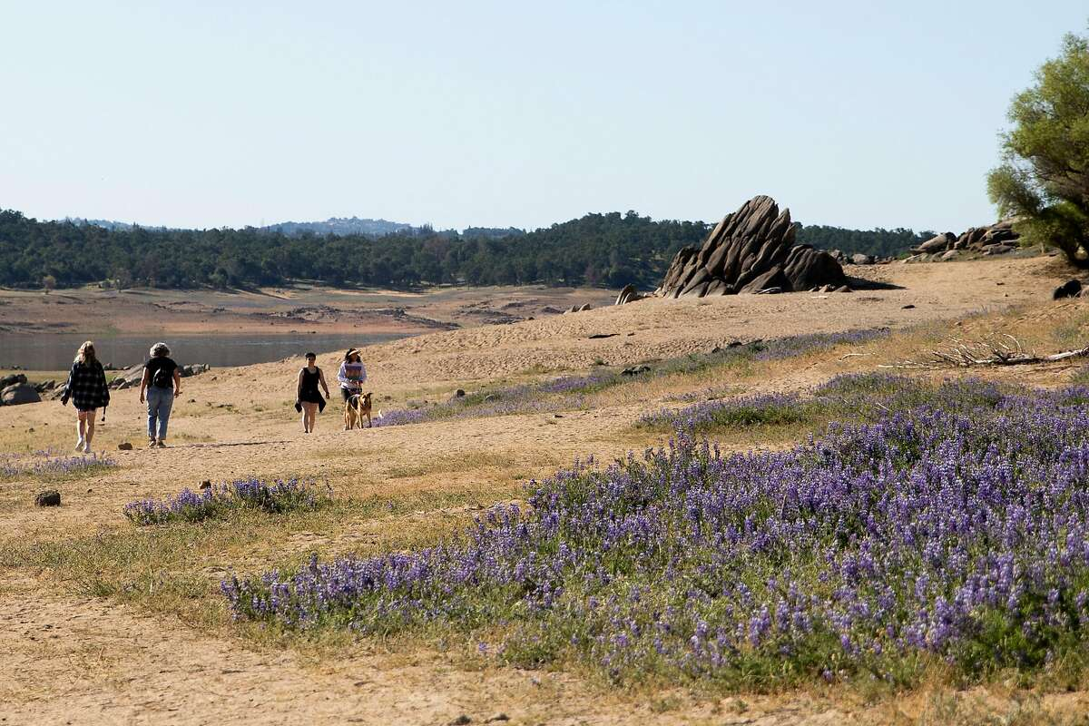 Hikers walk past a super bloom of purple lupine flowers seen across the drought-stricken landscape near Folsom Lake State Recreation Area in Granite Bay , Calif. Wednesday, May 5, 2021.