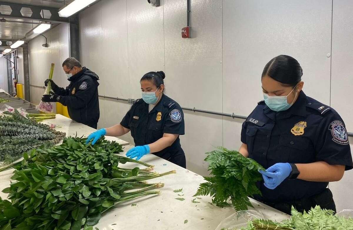 Agentes de CBP examinan cuidadosamente los envíos de flores comerciales para asegurarse de que las plagas de plantas que no están establecidas en los EE. UU. no ingresen y dañen la agricultura estadounidense, en particular la de la industria floral.