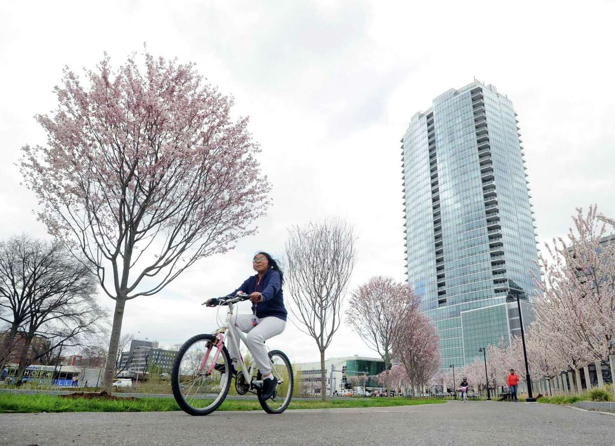 A cyclist enjoys a ride on a path past the Cherry trees in bloom in Mill River Park, Stamford, Conn., Friday afternoon, April 24, 2015. The building in the background is Trump Parc Stamford.