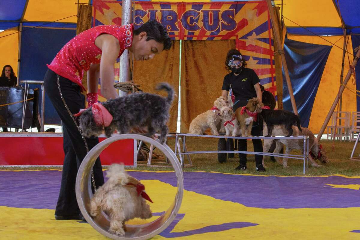 Dogs perform during a performance of the Zerbini Family Circus in Sumter, South Carolina, U.S., on Friday, April 30, 2021.