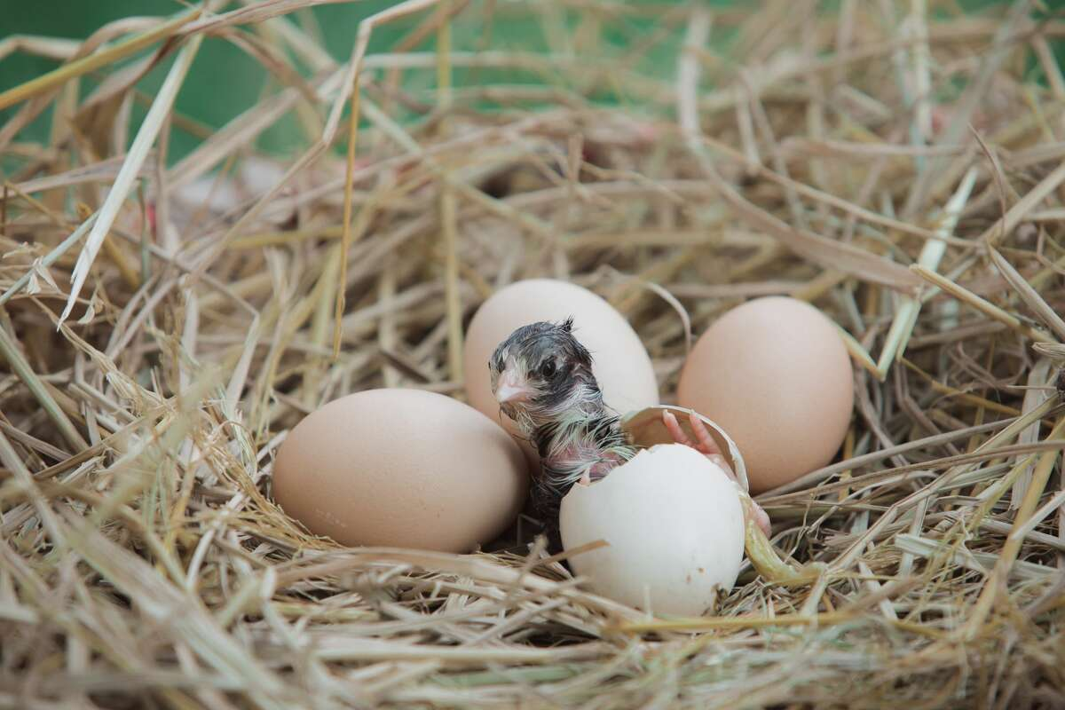 Accidentally disturbed a bird nest? Here's what wildlife officials say to do.
