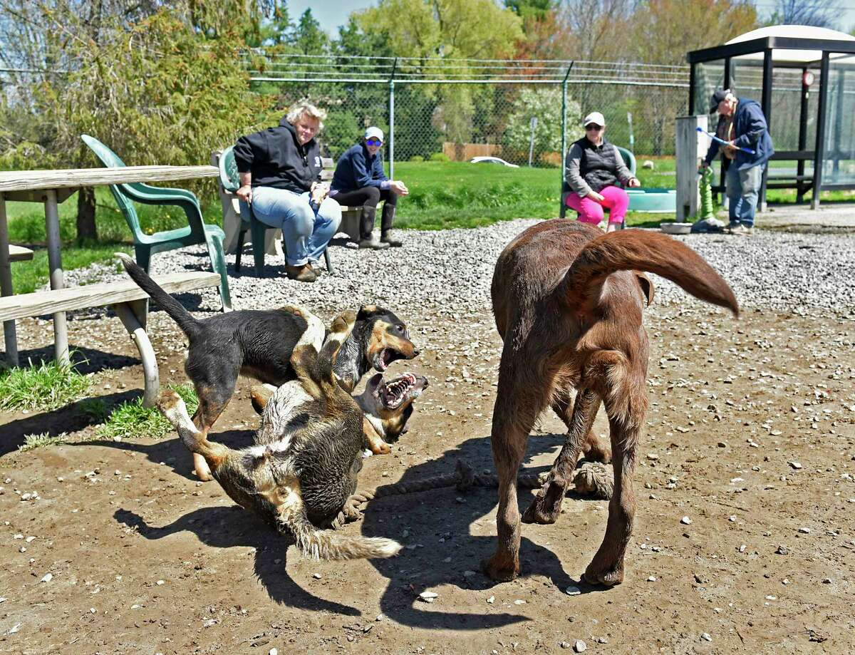 From left, Lisa Day, Emma Fandl, Deb Weisheit, and Doug Cutsogeorge watch their dogs play at the Bethlehem dog park on Thursday, May 6, 2021 in Bethlehem, N.Y. All their dogs were adopted during the COVID-19 pandemic. (Lori Van Buren/Times Union)