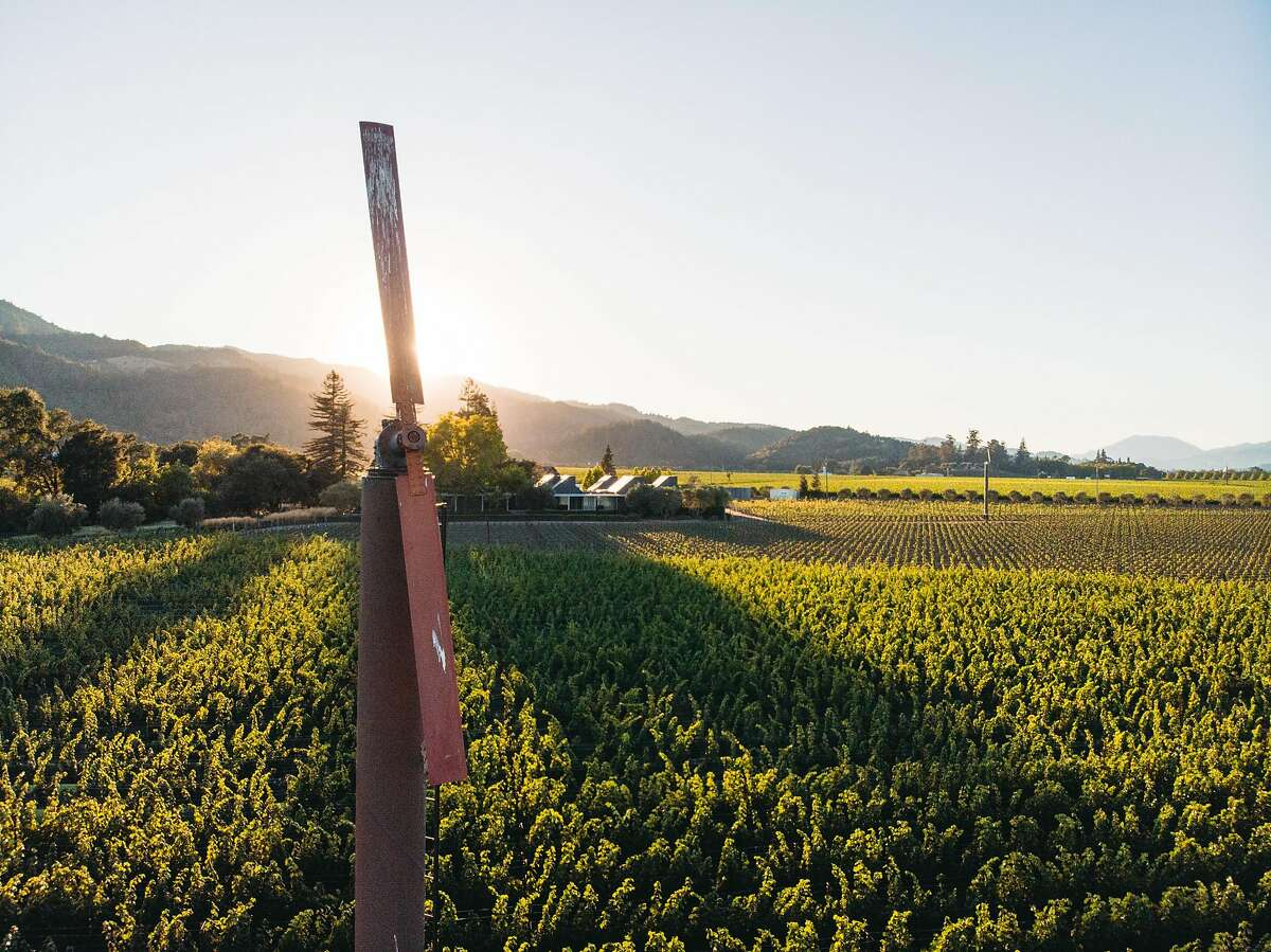 The Bella Oaks Vineyard was planted in the 1960s by Belle and Barney Rhodes and became famous for the Cabernet Sauvignon that Heitz Cellar produced from it.