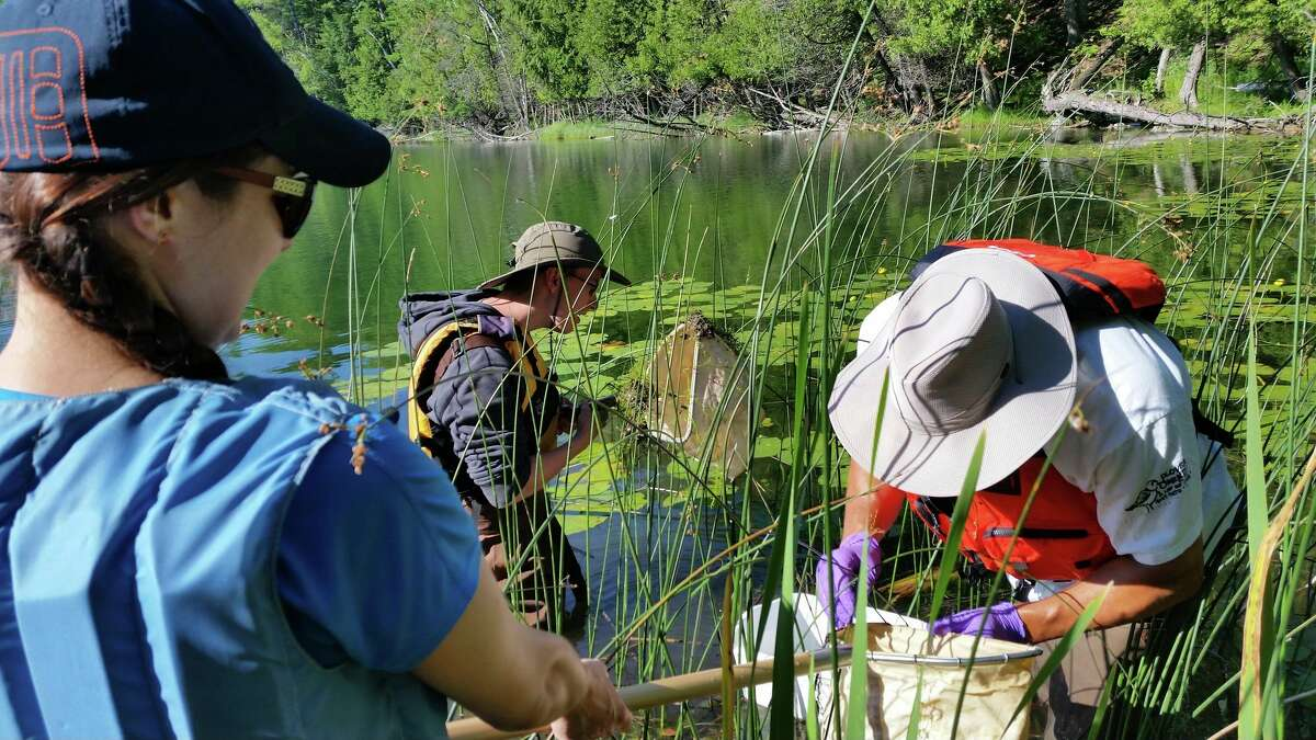 Educators use nets to search for dragonfly larvae in the plants and mud on the bottom of Bass Lake at Sleeping Bear National Lakeshore. (Courtesy Photo/National Park Service)