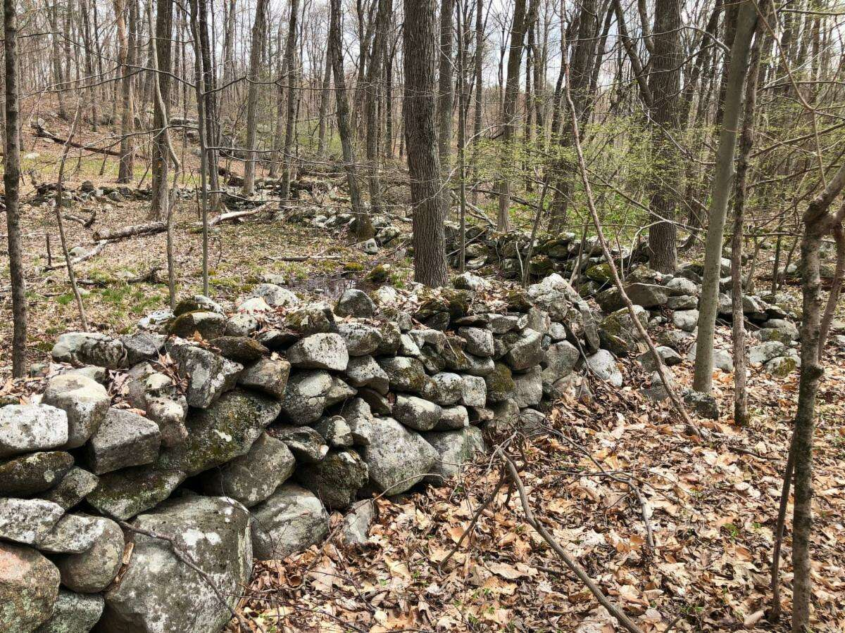 Sam Nunes, who is an environmental educator at the Woodcock Nature Center in Wilton, writes this monthly guest column titled