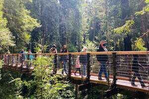 Members of the Sequoia Park Zoo try out the newest attraction, the Redwood Sky Walk.