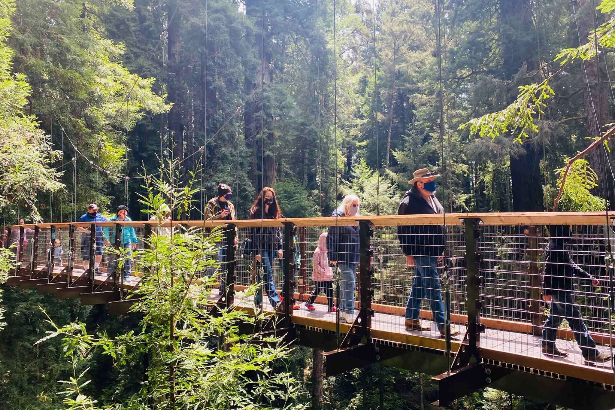 What's it's like to hike 100 feet off the ground in a Calif. redwood forest