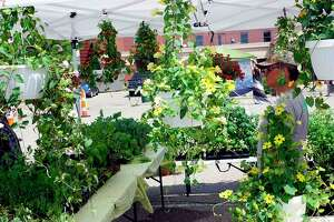 Flowers are sold during last year's Big Rapids Farmers' Market. (Pioneer files/Joe Judd)