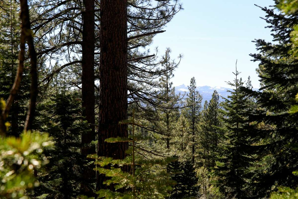 Views of the Sierra Crest between the trees.