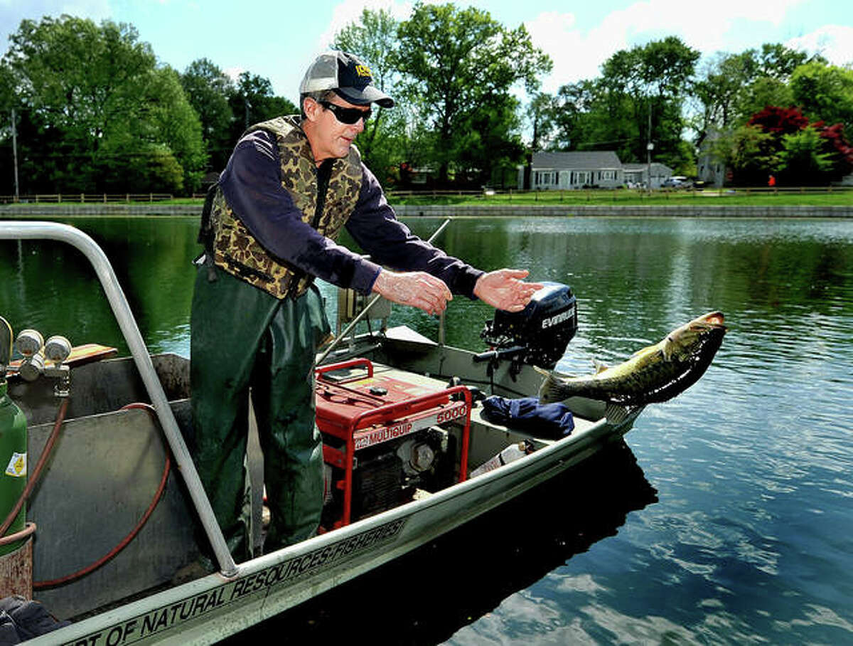 Fisheries Biologist Eric Ratcliff of the Illinois Department of Natural Resources releases the fish they captured in Leclaire Lake in Edwardsville Wednesday after measuring them and reporting to city officials. They went on to visit Joe Glik Park for the same tasks.