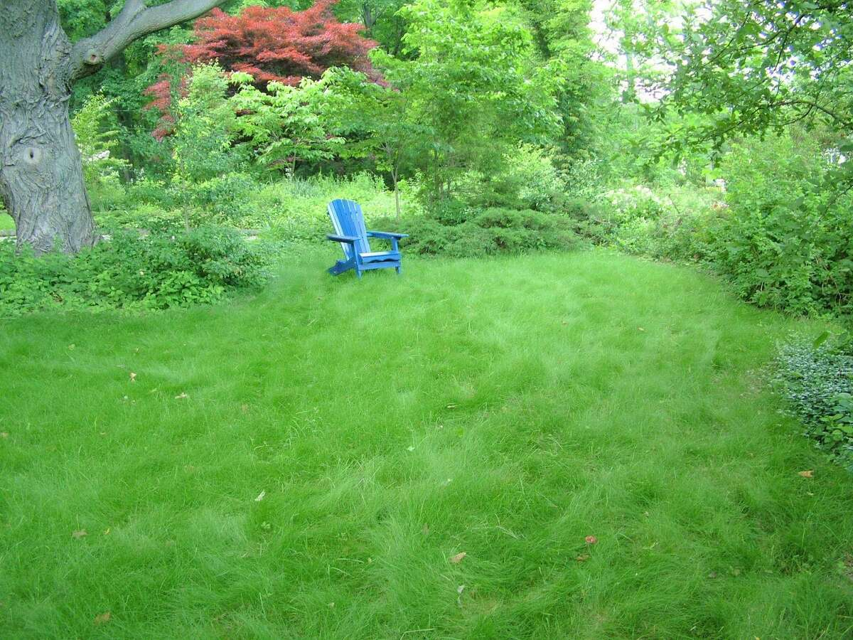 A lush low-maintenance lawn is planted with fine fescue grasses by Middletown gardening expert Tom Christopher.