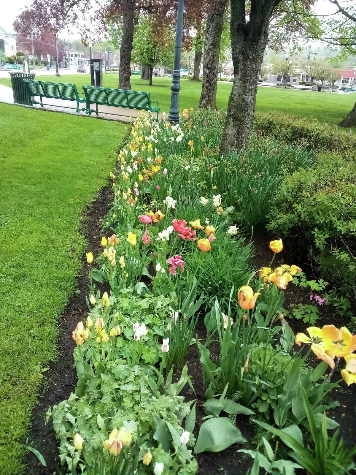 Torrington's Coe Memorial Park on the corner of South Main Street and Litchfield Street is in full bloom this week, with a variety of tulips and flowering trees and shrubs.