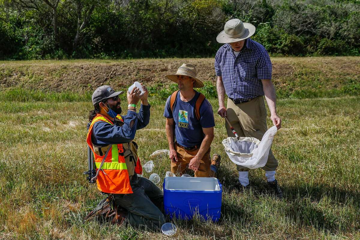 Presidio Trust ecologist Jonathan Young (left) looks inside a container after capturing a California ringlet butterfly, working with David Harelson and lepidopterist Liam O'Brien in Marin County.