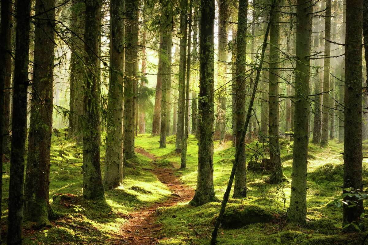Studies show interacting with nature benefits physical health, psychological well-being, cognitive ability and social cohesion.