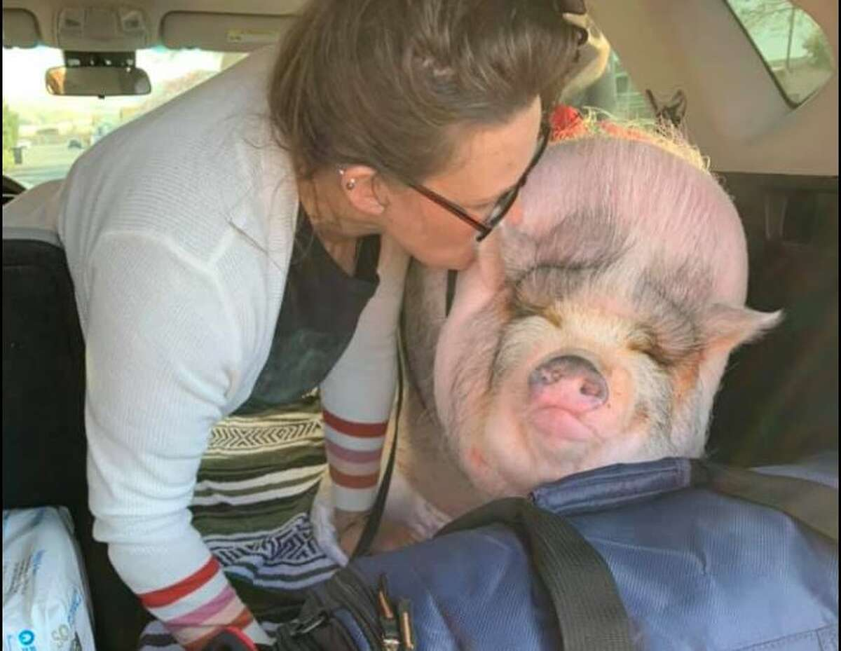 Honey was an emotional support animal for Michele Marie Durward's family.