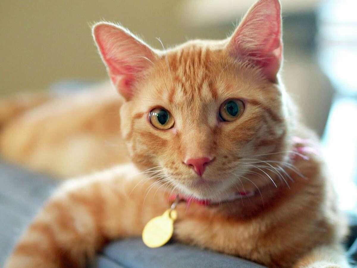 Cats are very sensitive to NSAIDs, such as ibuprofen, naproxen or diclofenac (Voltaren).