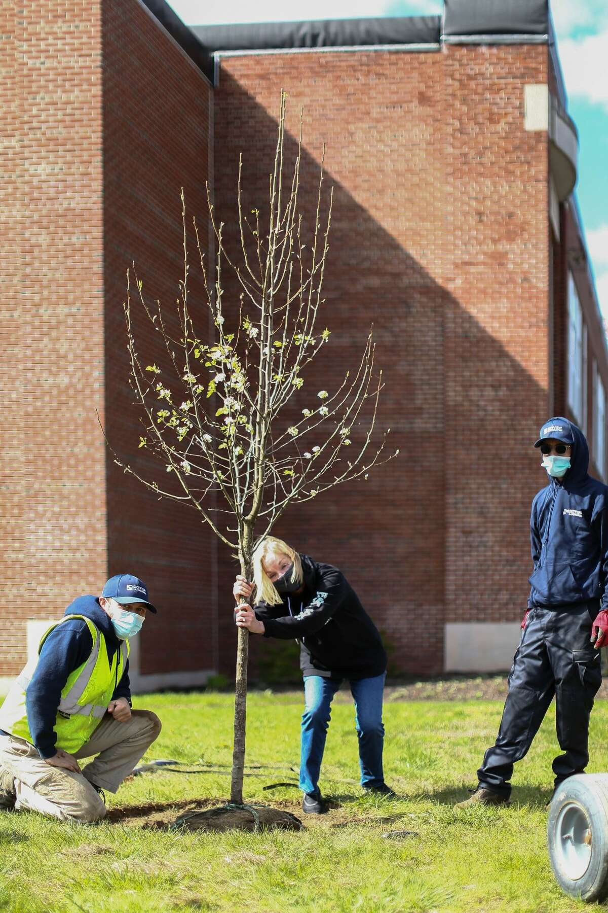 At Genet Elementary School,East Greenbush, Dr. Marianne DiCerbo, of Albany Braces and two helpers from Skyview Landscaping of Waterford plant a tree.