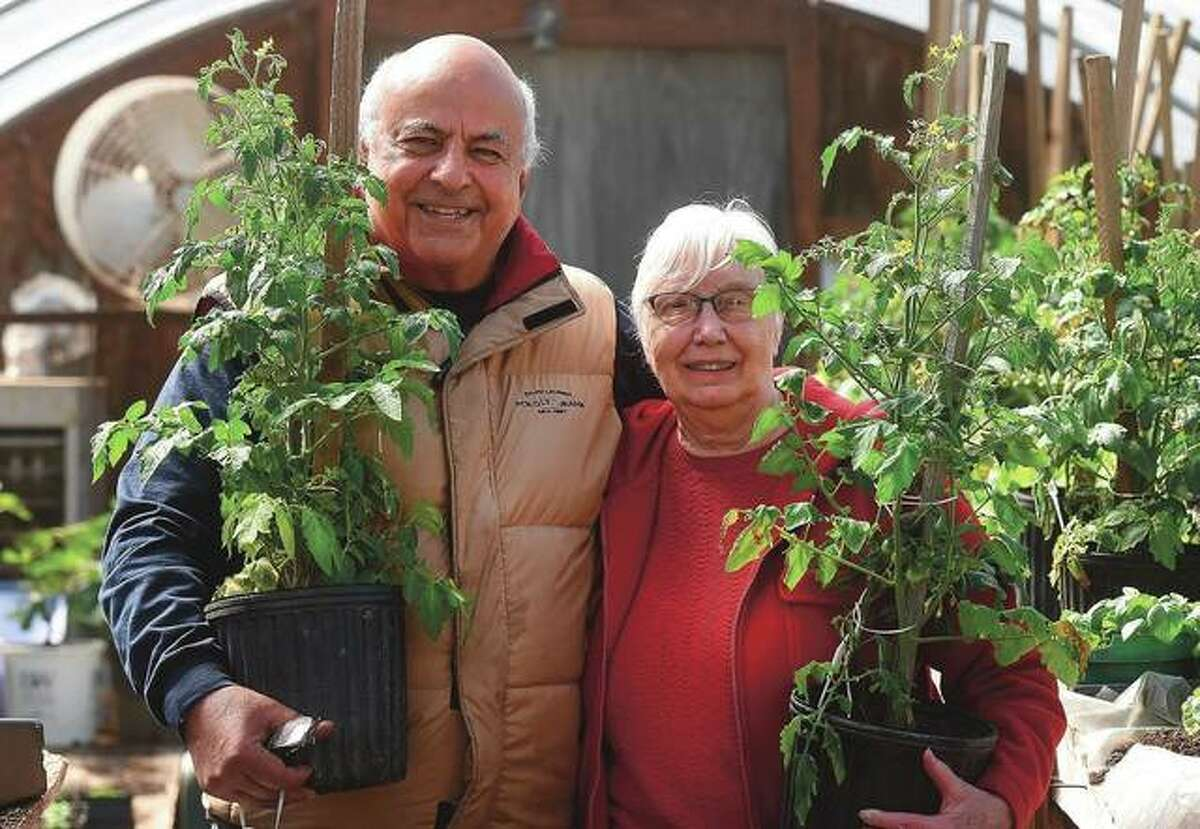 Gus Picardo and his wife Mary Picardo raise a variety of vegetables and flowers. The couple got a head start on their garden when they stayed home because of the COVID-19 pandemic.