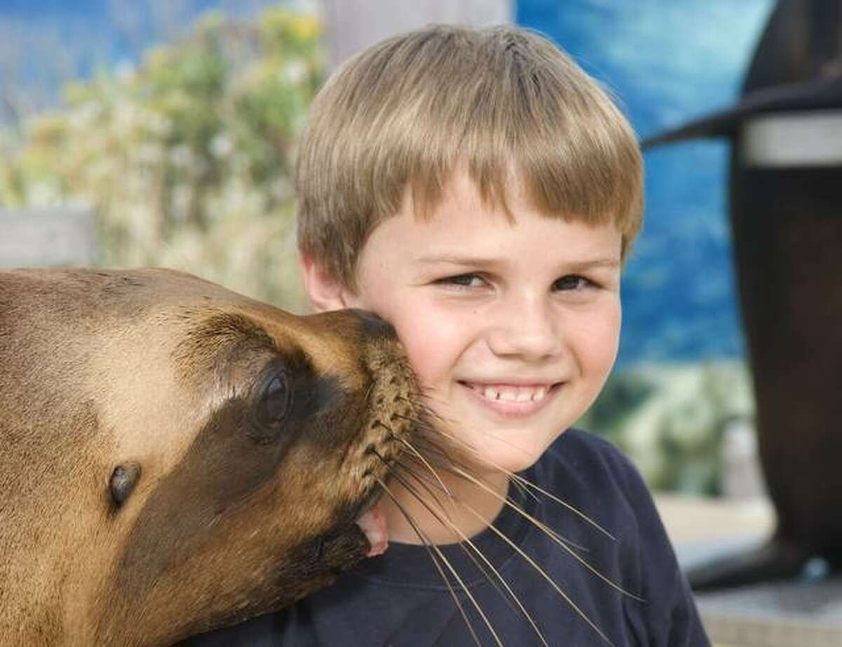 Raging Rivers Water Park will host a traveling sea lions show in June. The show is operated by Squalus Inc., an organization that provides homes for beached sea lions unable to return to the wild.