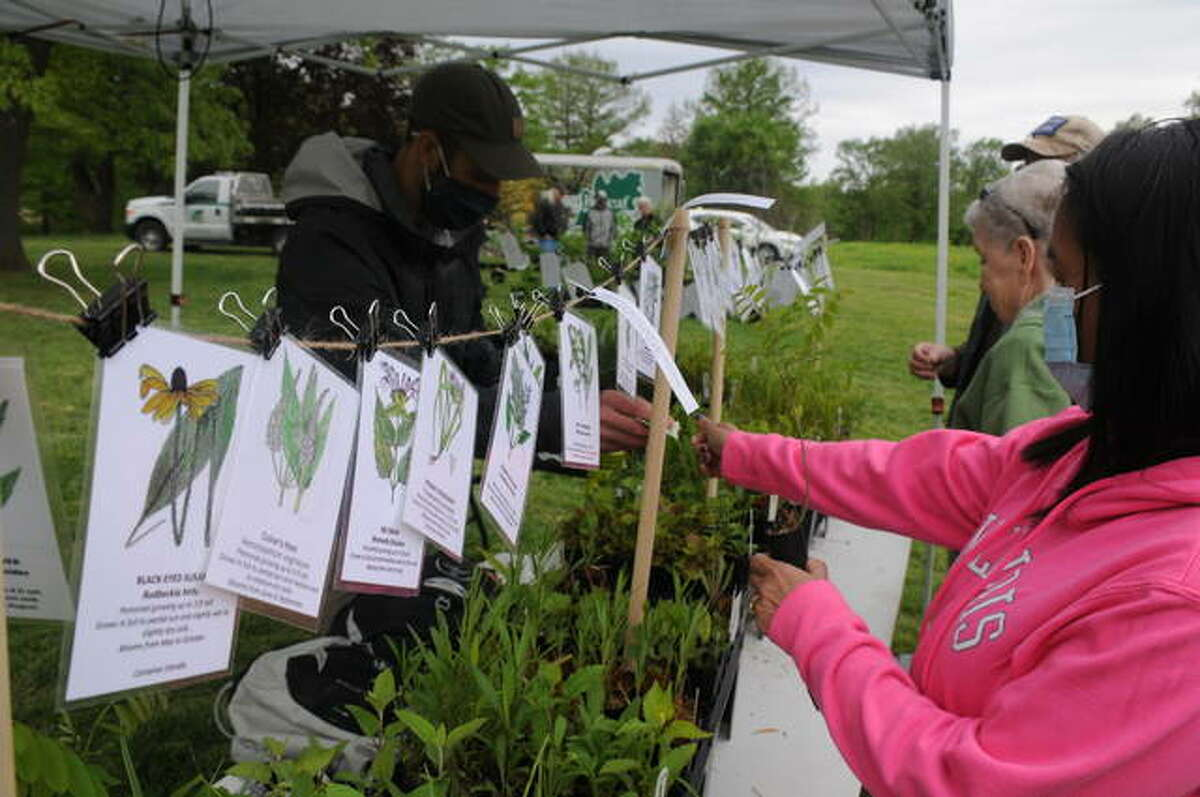 Shoppers browse the native plant selections during The Nature Institute's Wildflower Market.
