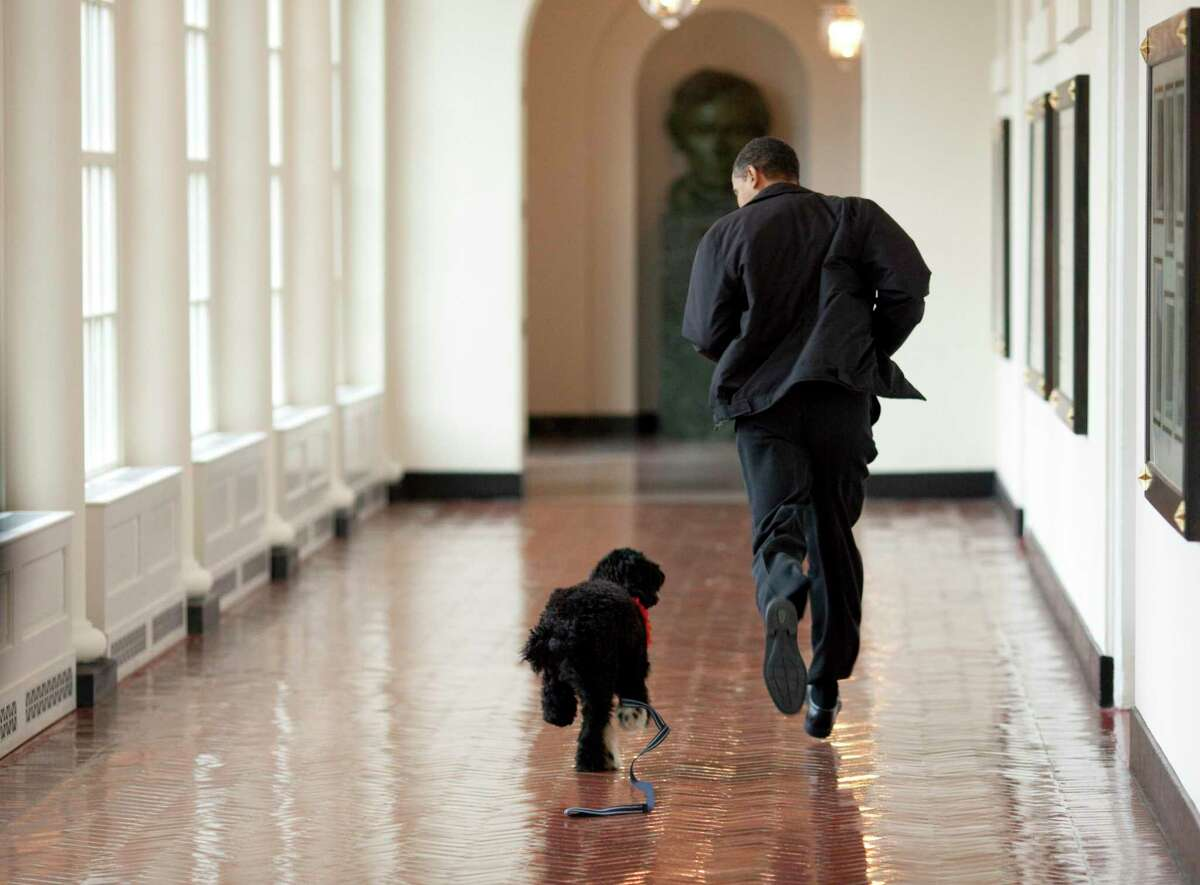 Michelle and Barak Obama shared on their social media that their dog Bo had died. In this handout image released by the White House on April 13, 2009, U.S. President Barack Obama runs down a corridor with Bo, a Portuguese water dog, in the White House in Washington, D.C.