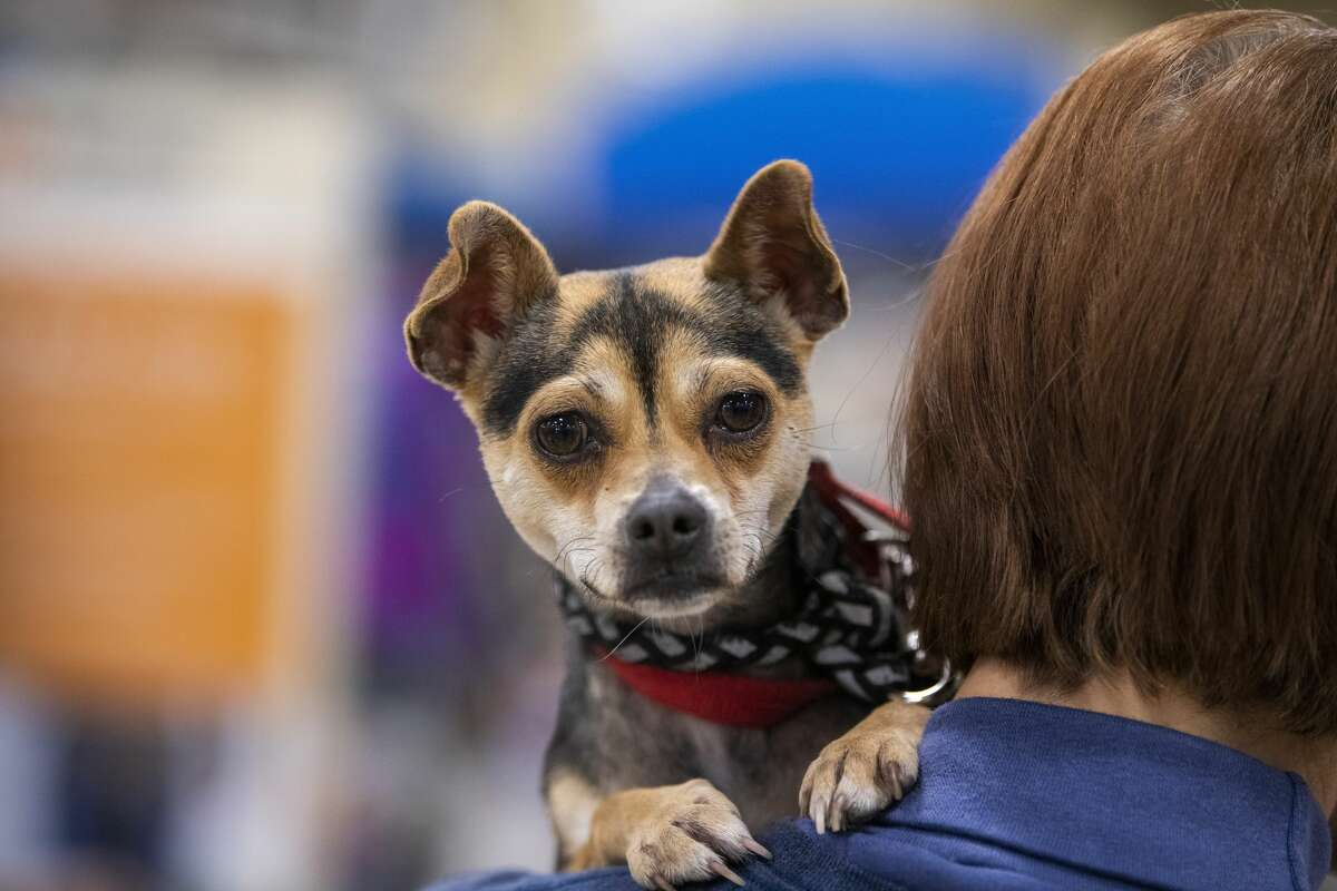 Unlike other U.S. pet shelters, local organizations and the Animal Care Services aren't seeing a rise in returns after the pandemic adoption boom last year in San Antonio.