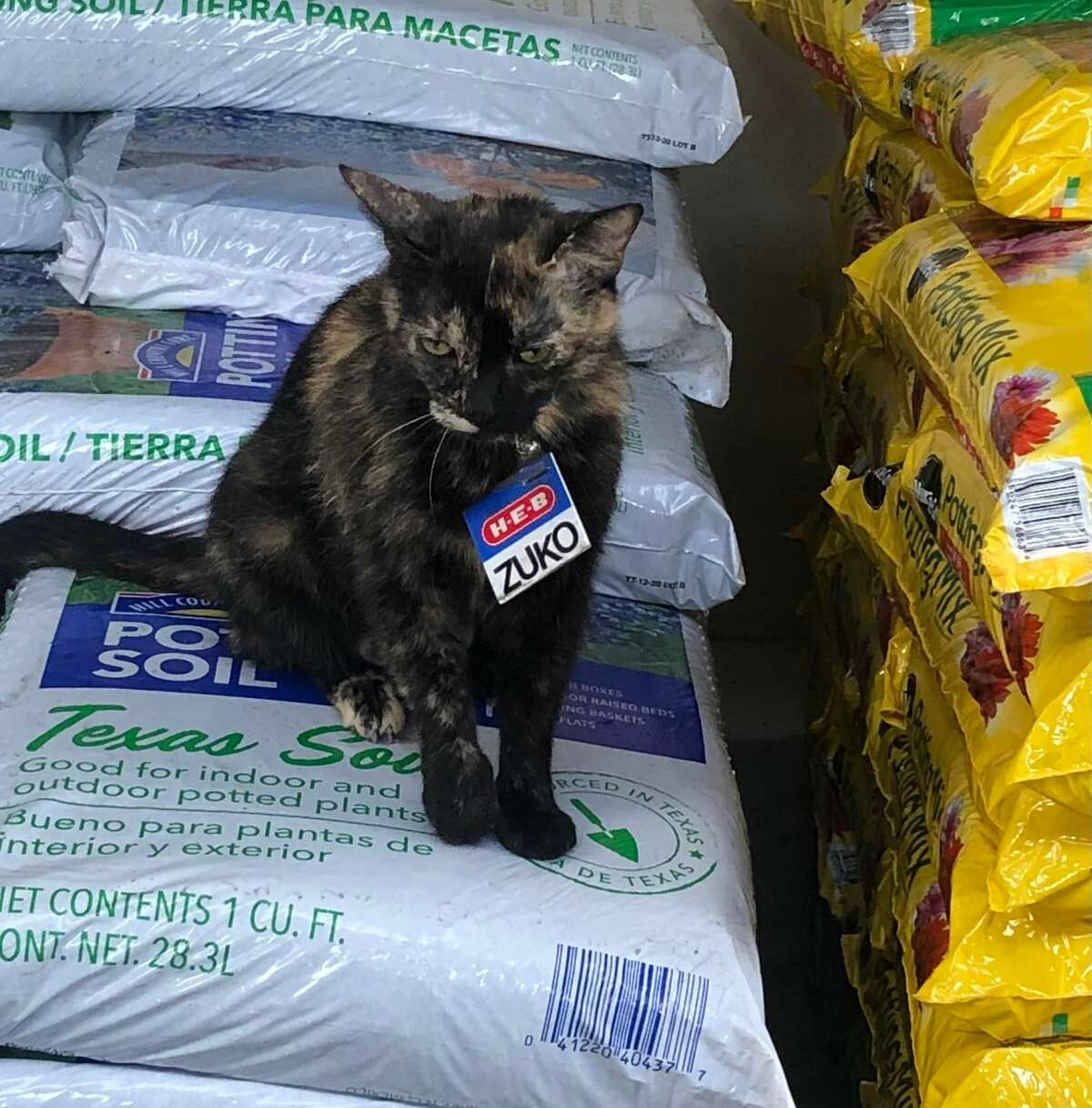San Antonio shoppers, meet Zuko - H-E-B's cutest partner (who happens to be a precious stray cat).