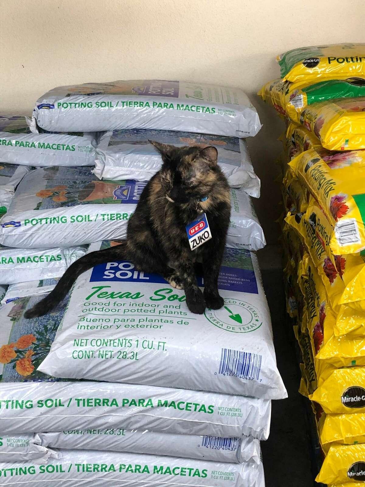 Mica Mendoza told MySA.com she saw Zuko in the garden center last Friday while at the H-E-B plus! on Potranco and 1604, near SeaWorld San Antonio.