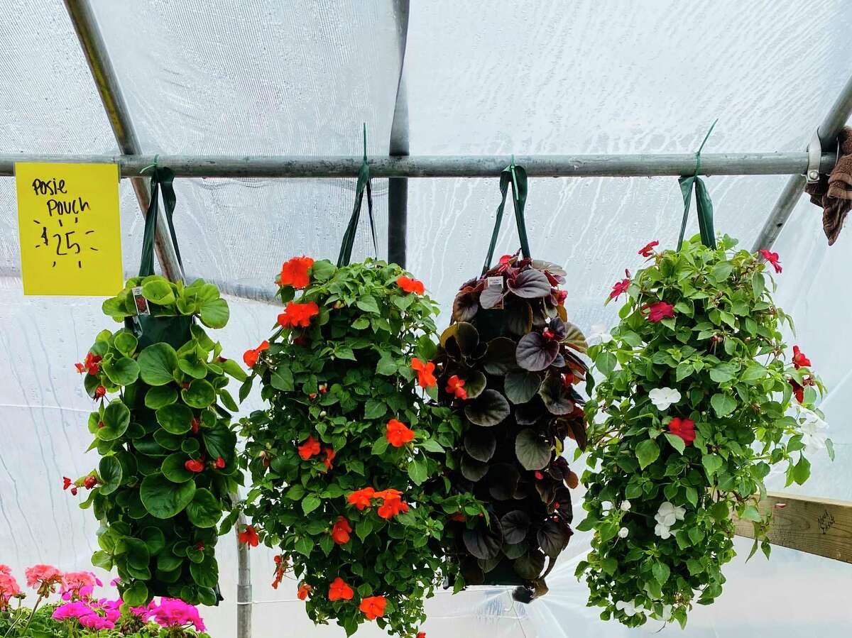 Some of the flowers on display at Root's Greenhouses. (Thumb Industries/Courtesy Photo)