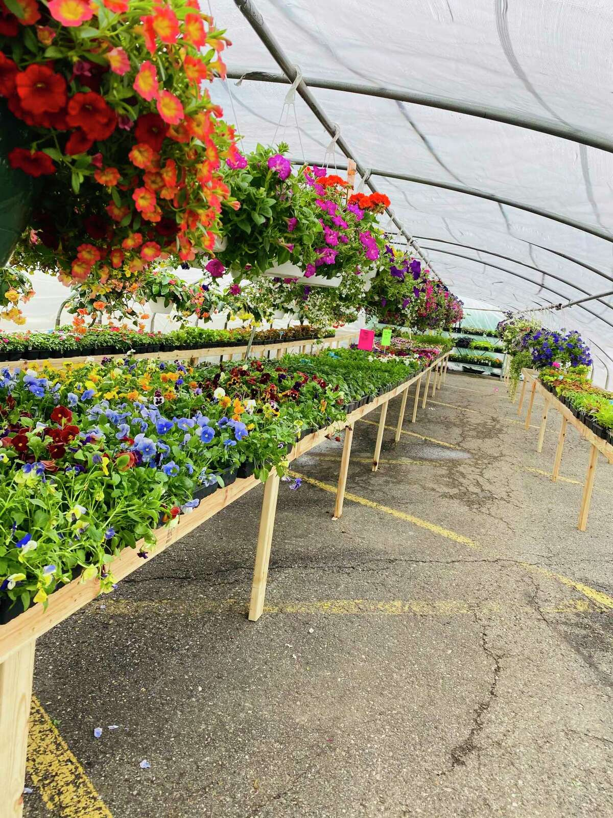 The interior of one of the new Root's Greenhouses located between Mortimer's Lumber and the former McDonald's Food and Family store. Thumb Industries set up the greenhouses to keep the former McDonald's tradition going. (Thumb Industries/Courtesy Photo)