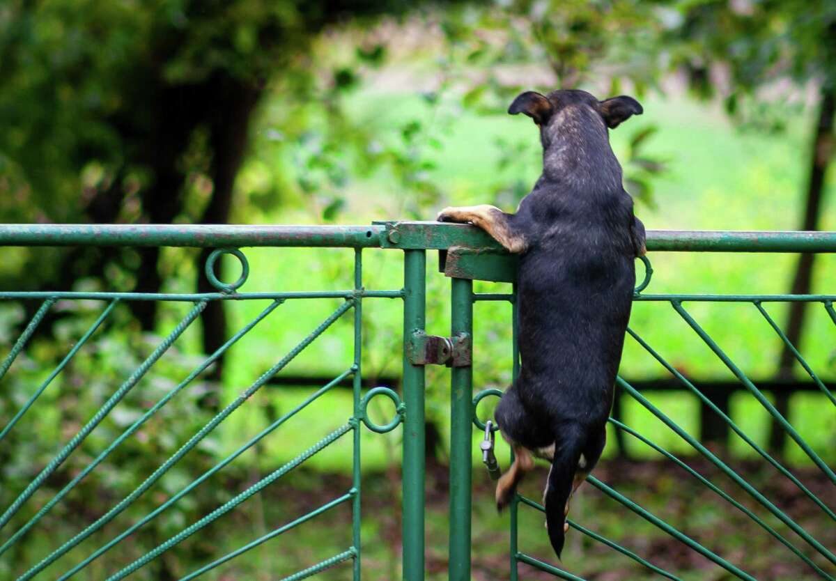 Dogs are less likely to be tempted to jump the fence when they have plenty of exercise and playtime.