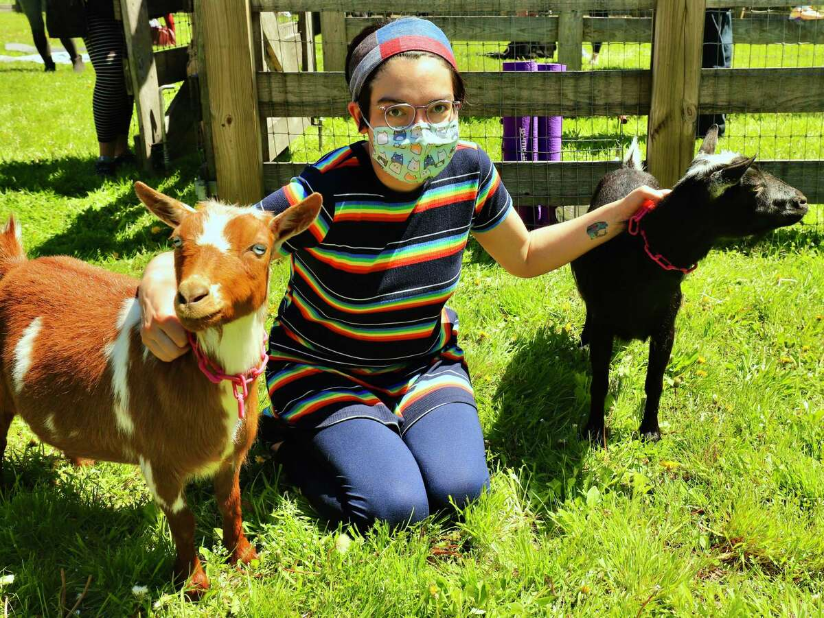 The Catherine Violet Hubbard (CVH) Animal Sanctuary holds monthly goat yoga sessions.