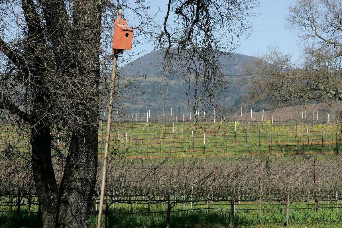 A kestral hawk birdhouse in the Clos du Bois vineyards, seen in 2006.