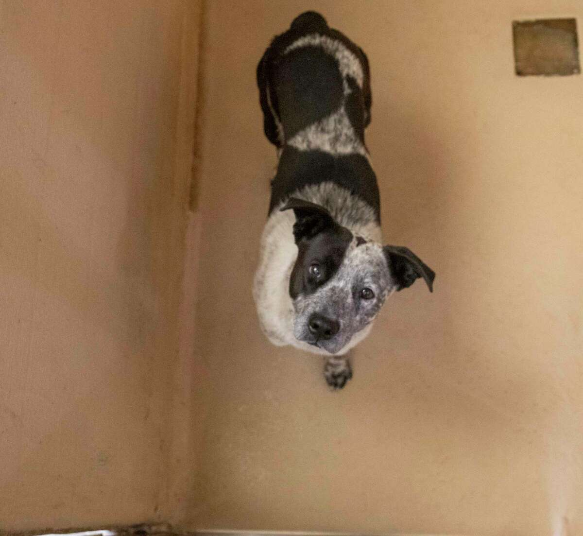 Dogs and cats up for adoption as seen Monday, May 10, 2021 at the 1200 N. Fairgrounds Road. Jacy Lewis/Reporter-Telegram