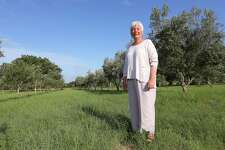 Sandy Oaks Olive Orchard owner Saundra Winokur at her Elmendorf farm in 2013. Winokur planted her first olive tree in 1998 and has since grown the farm to include an 11,000-tree orchard, gift shop and restaurant.