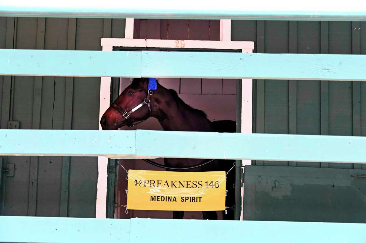 Kentucky Derby winner Medina Spirit relaxes in the Stakes barn after arriving at Pimlico Race Course Monday, May 10, 2021. (Lloyd Fox/The Baltimore Sun via AP)
