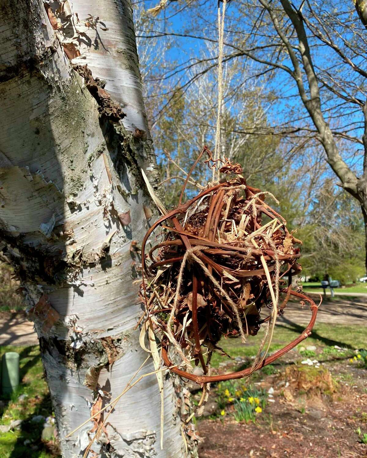 Nesting balls for birdsare filled globes made ofgrape vines with things that birds can use to build their nests.The Armory Youth Project (AYP) and the Spirit of the Woods Garden Club, Inc. are partneringfor a Youth Gardening Program; during the first meeting participants made nesting balls. (Courtesy photo)