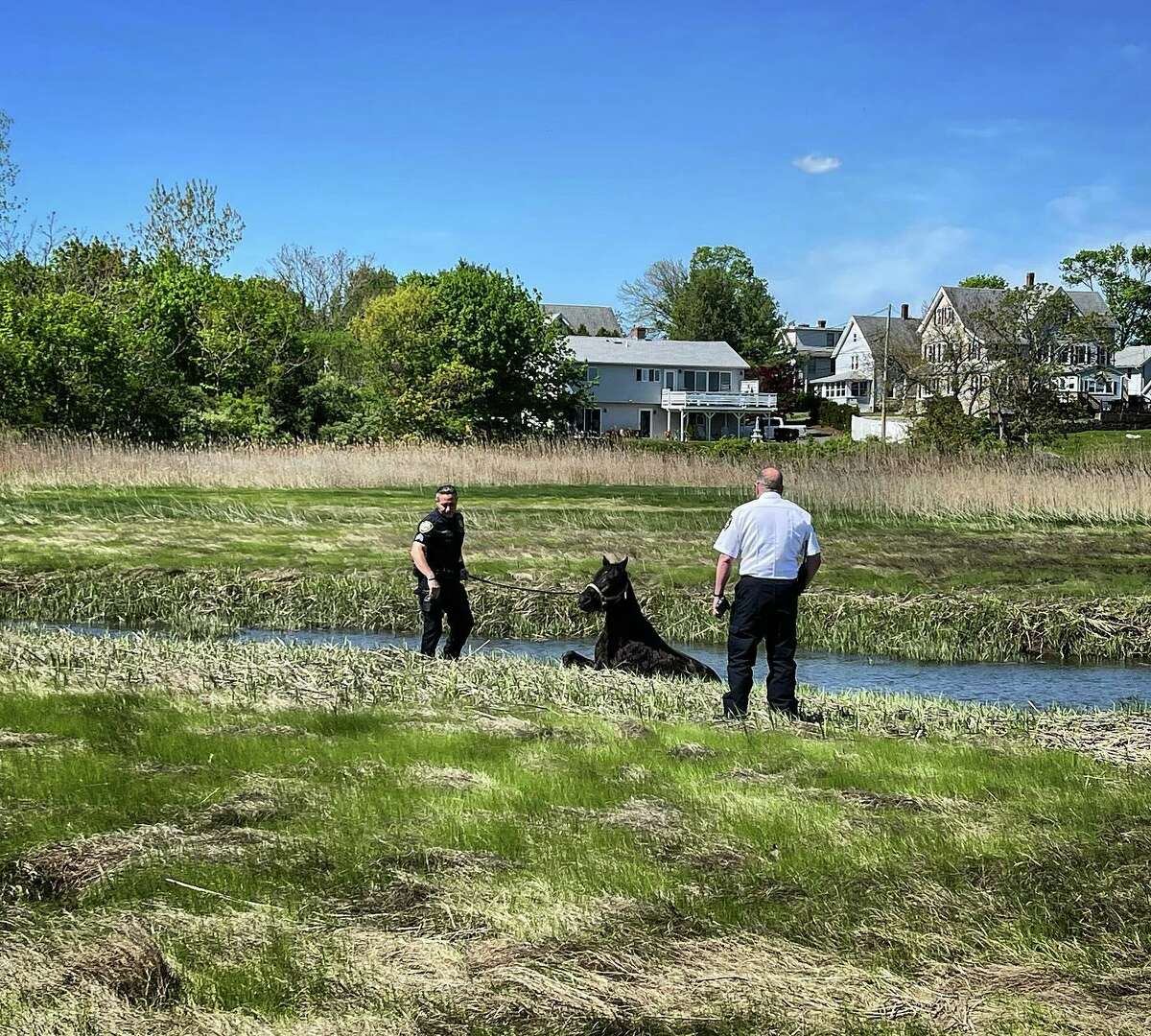 First responders, animal control officers and citizens helped free a horse stuck in the muddy, marsh area of the Branford River in Branford May 11, 2021.