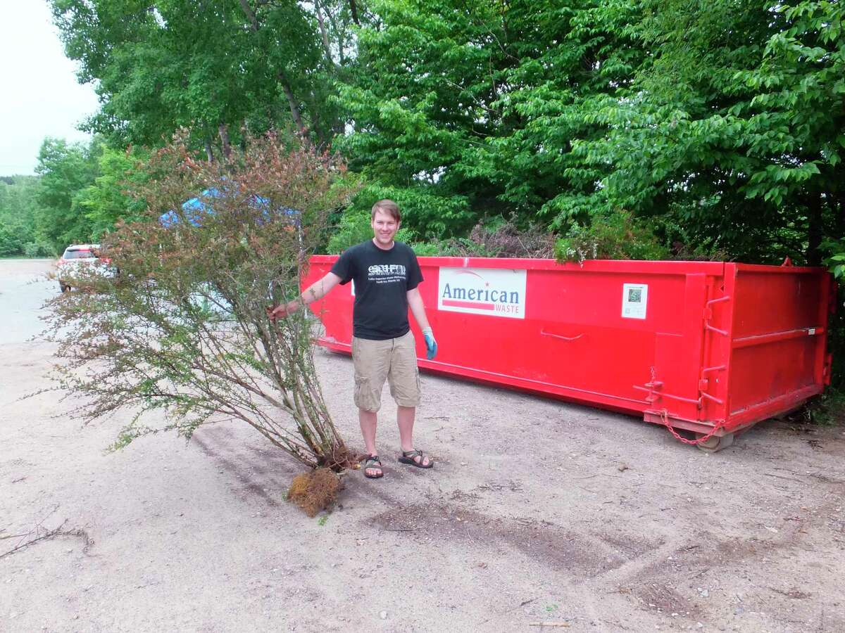 John Ransom, conservation specialist for the Benzie Conservation District, tosses a Japanese barberry bush in a dedicated dumpster for the invasive plants. (Courtesy Photo)