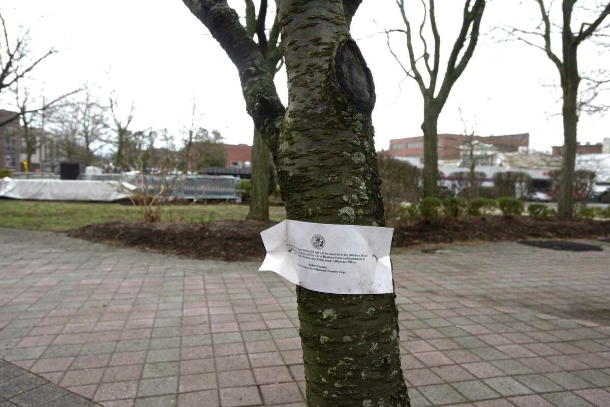 A tree is marked for removal at the Danbury Green in downtown. Friday, March 26, 2021, Danbury, Conn.