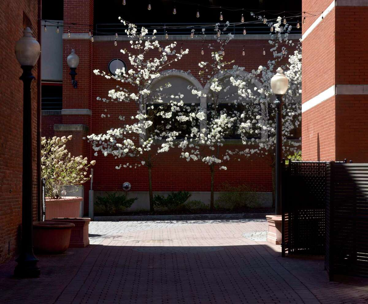 A tree blooms next to the parking garage in downtown. New Socioeconomic demographic information being shared about Danbury's neighborhoods will be used by a task force to develop the city masterplan for the next 10 years. Friday, April 23, 2021, in Danbury, Conn.